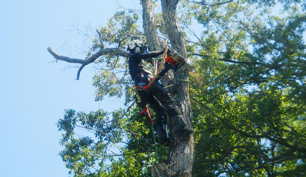 木登り画像