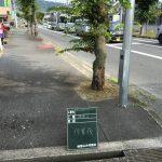 街路樹の剪定および除草
