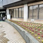 市内花壇管理 花の植替え